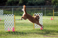 AKC Agility Dolores Day 2